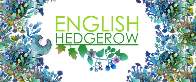 ENGLISH HEDGEROW